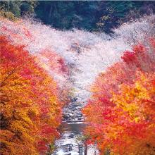 豊田市の「四季」3